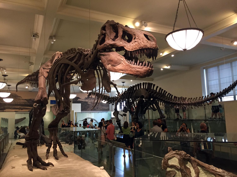 Fósseis do tiranossauro rex e outros animais pré-históricos