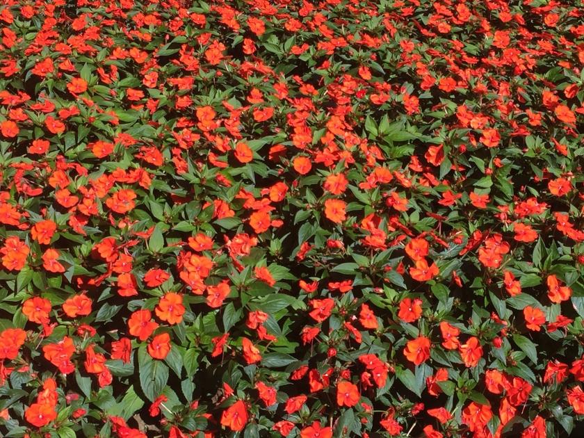 Canteiro de flores