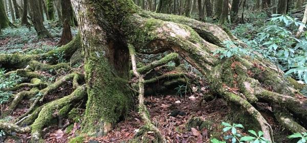Aokigahara – A Floresta dos Suicidas