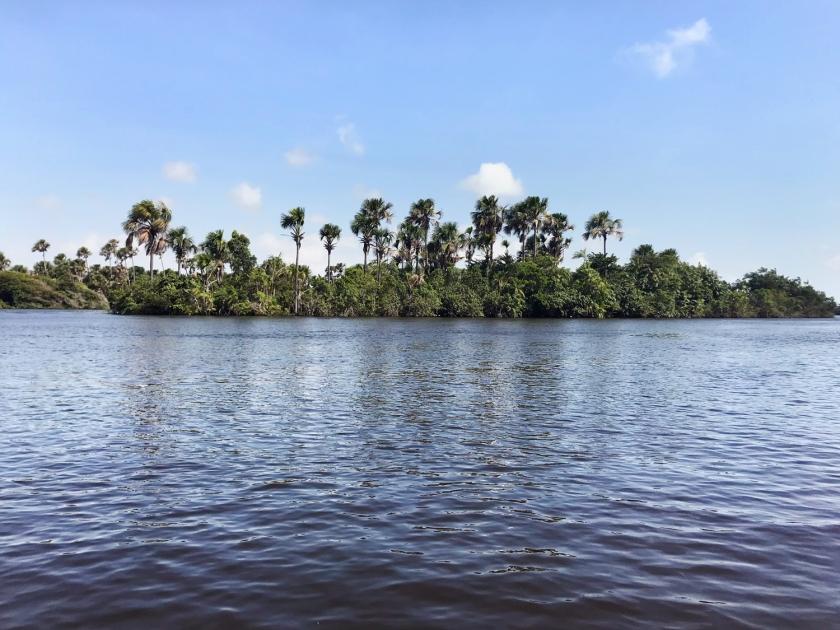 Vegetação às margens do rio Preguiças
