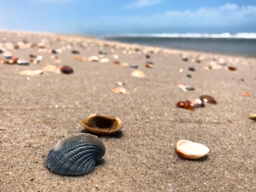 Conchinhas da Praia de Caburé