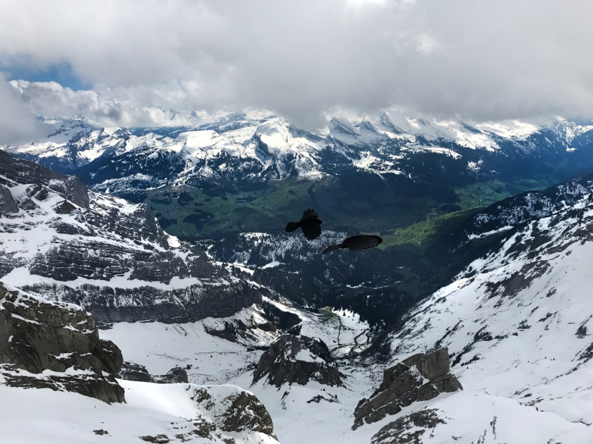 Pássaros sobrevoam as montanhas