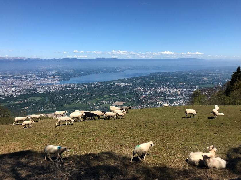 Pasto com ovelhas