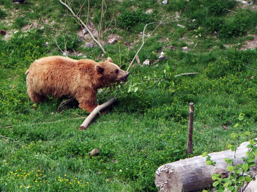 Um dos ursos do parque