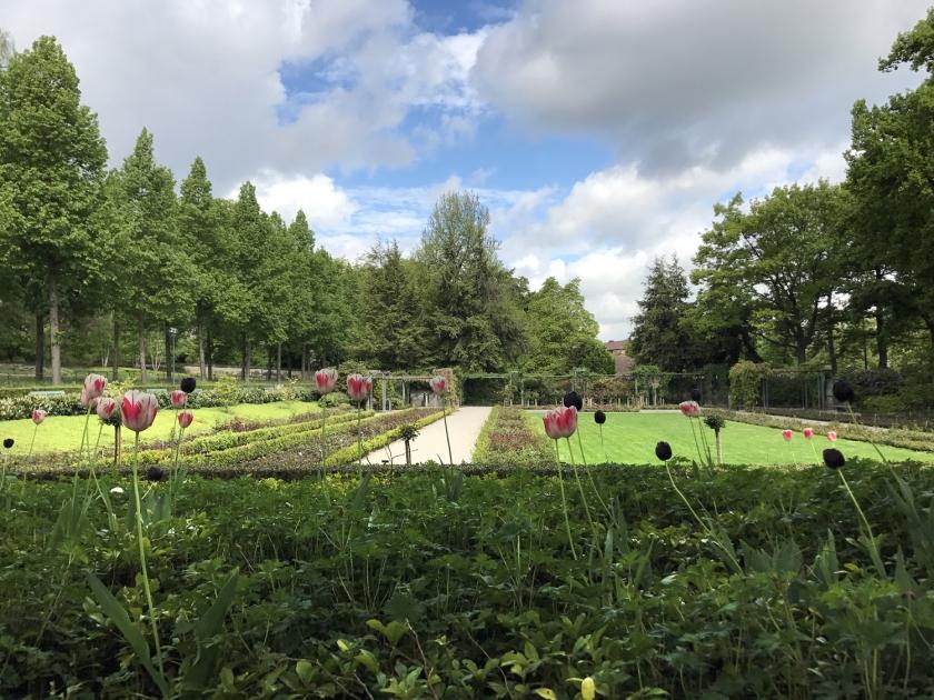 Jardim com tulipas