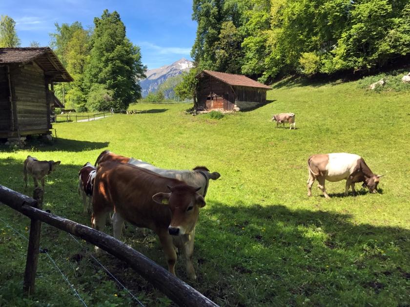 Animais criados soltos no pasto