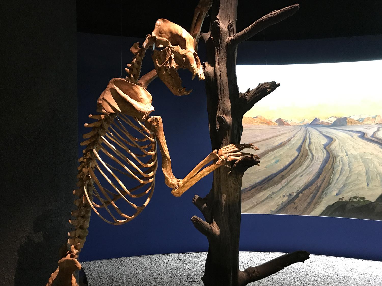Museu de história e geologia