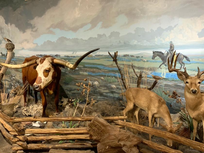 Exposição de animais empalhados