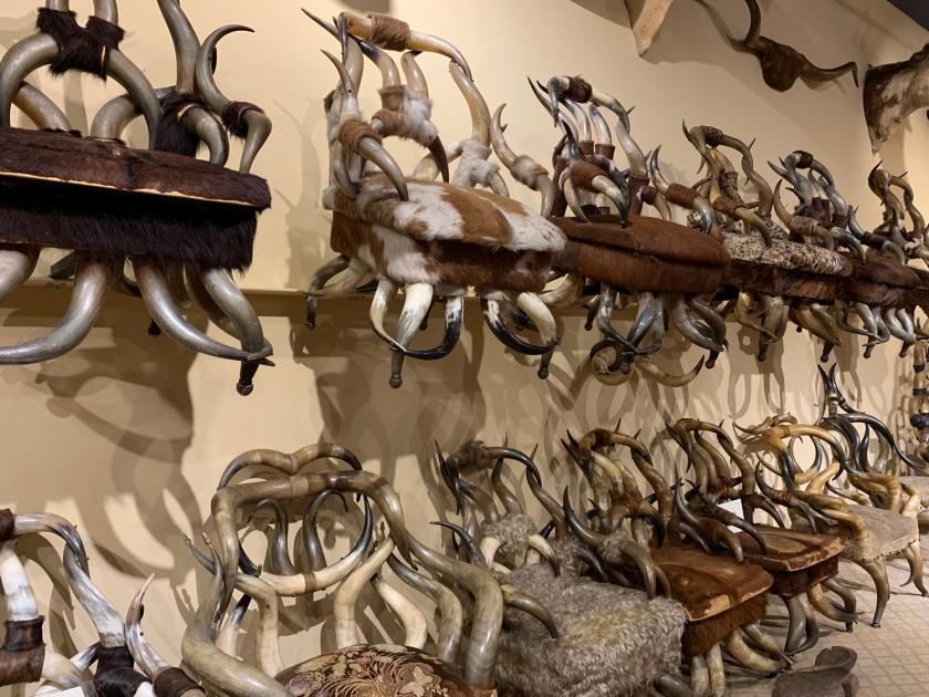 Cadeiras feitas com longhorns