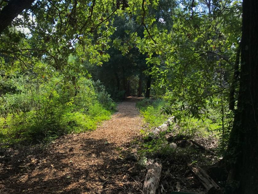 Uma das muitas trilhas no mato