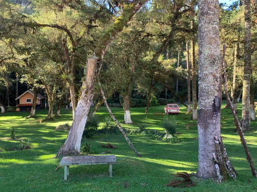 Ampla área verde no bosque