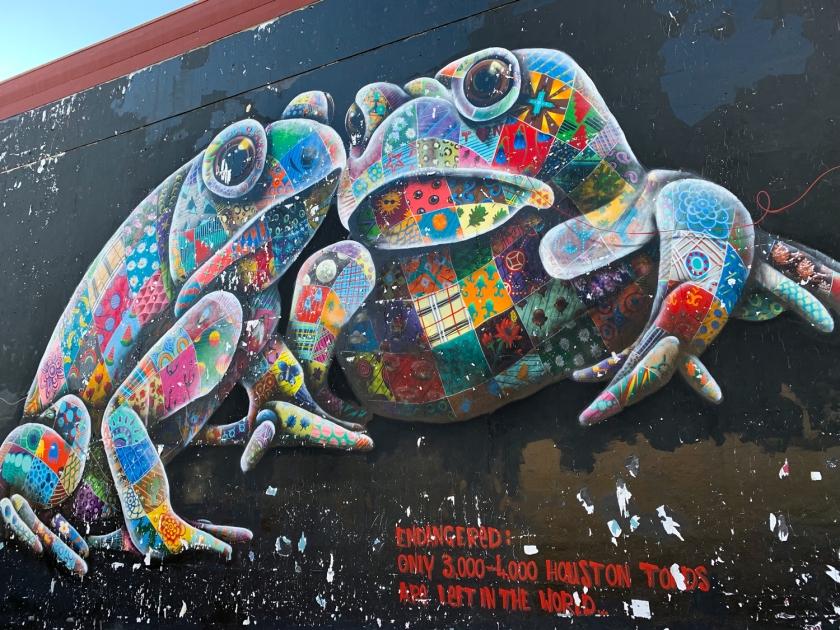 Houston toads