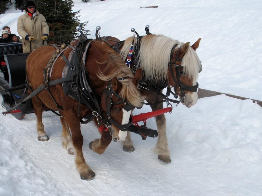 Passeio de carruagem na neve