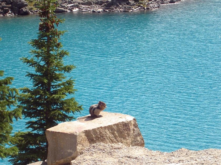 Esquilo no The Rockpile Trail
