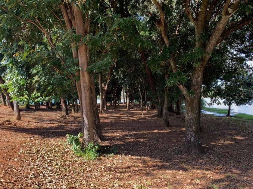 Bosque da Megafauna