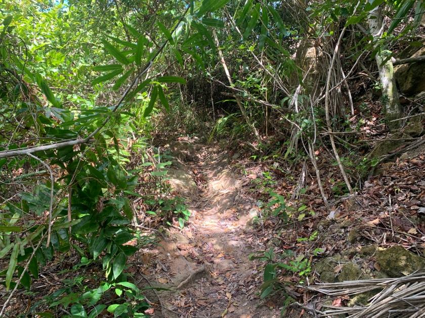 Entrada da trilha para a topo das falésias