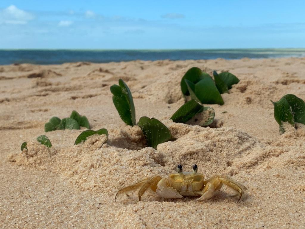 A praia é quase deserta