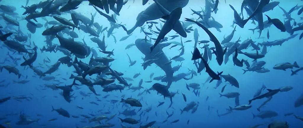 Atividade pesqueira de alta escala