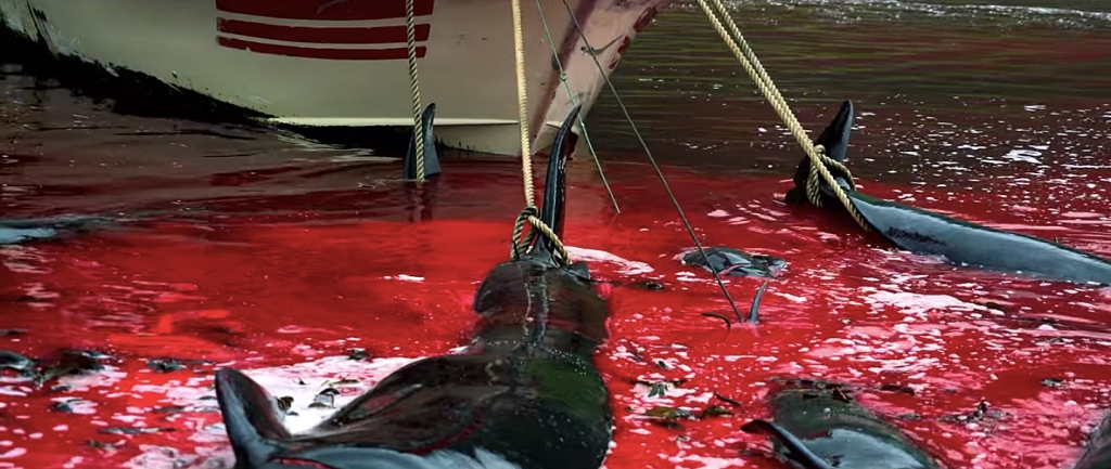 Mar vermelho de sangue